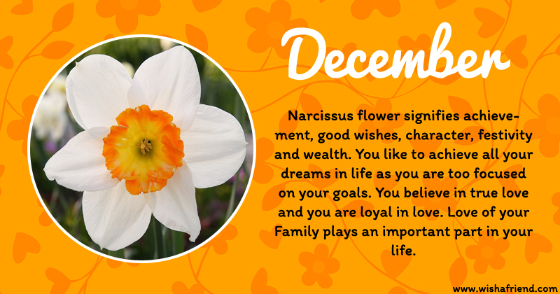 december birth flower  narcissus, Natural flower
