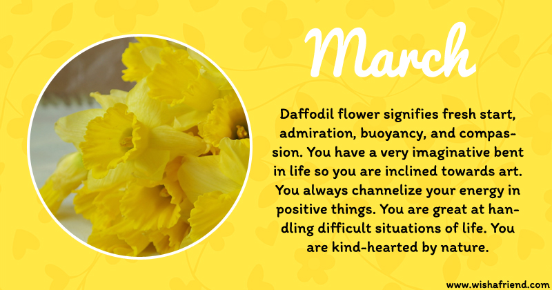 Astrology March Birth Flower Daffodil