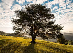 Birth Tree